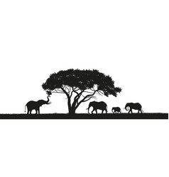 Black silhouette of elephants in savannah vector