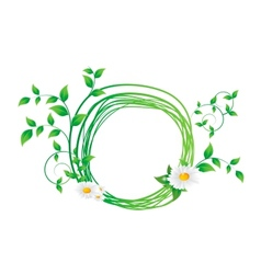 chamomile flower and green leaves vector image