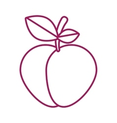 Contour purple line with apple vector