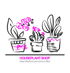 cute pots with blloming housplants and cactus vector image