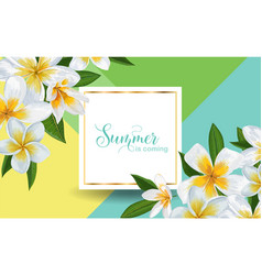 hello summer tropical background plumeria flowers vector image