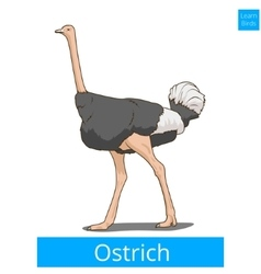 Ostrich learn birds educational game vector