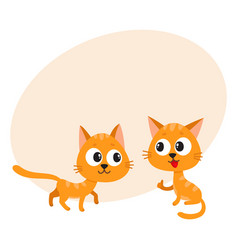 Two cute funny naughty playful red cat vector