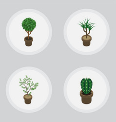Isometric flower set of peyote tree fern and vector