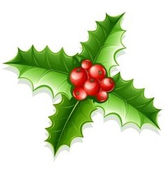 holly green leaves and red vector image