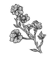 magnolia flower sketch engraving vector image