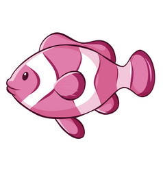 Pink clownfish on white background vector