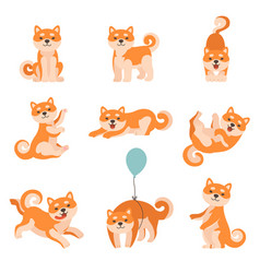 shiba inu dogs performing everyday activities set vector image
