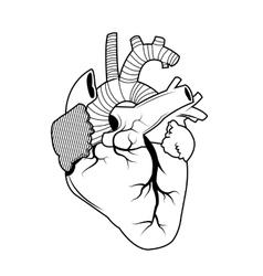 Heart tattoo art design vector image vector image