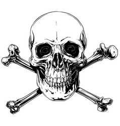 graphic detailed human skull with crossed bones vector image vector image