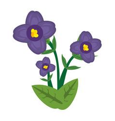 African violet flower image vector