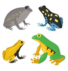 Frog cartoon tropical wildlife animal green vector