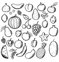 fruits doodle hand draw set food elements vector image