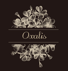 hand drawn design with oxalis isolated on vector image