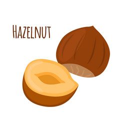 hazelnut in flat cartoon style forest natural nut vector image