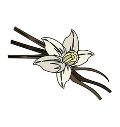 Vanilla flower and pods icon image vector