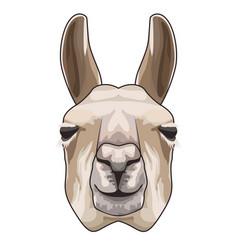 Alpaka animal domestic head character vector