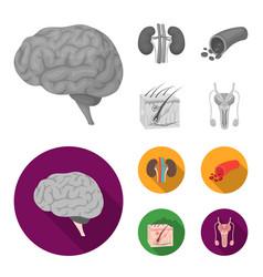 Brain kidney blood vessel skin organs set vector