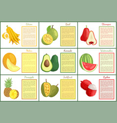 Citron and chompoo lychee durian posters vector