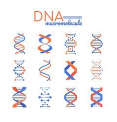 dna macromolecule - line design style vector image