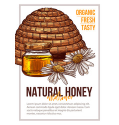 natural bee honey hand drawn poster template vector image