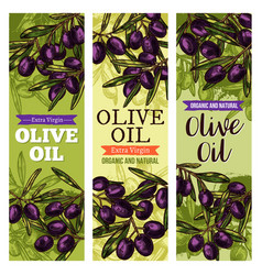 Olives bunch sketch banners for olive oil vector