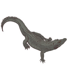 Realistic crocodile isolated on a white vector