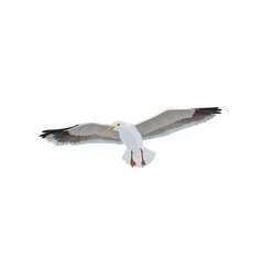 Seagull soaring in the sky gray and white sea vector