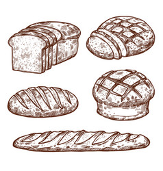 Sketch bread icons of bakery shop vector