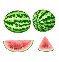 sweet juicy watermelon vector image