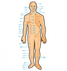 chinese acupuncture scheme vector image