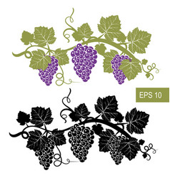 the grapes are symbols template isolated vector image