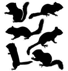 Collection of silhouettes of chipmunks vector