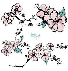 springtime apricot blossom hand drawn sketch vector image