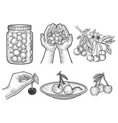 cherry set line art sketch vector image