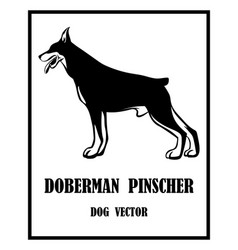 Doberman pinscher dog eps 10 vector