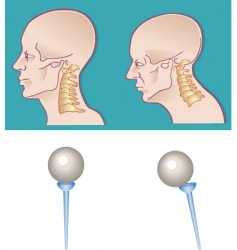 Neck spine vector