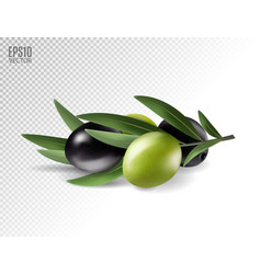 Realistic olives branch vector