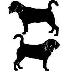 silhouette dog beagle breed vector image