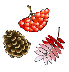 The set of symbols of autumn bunch of red rowan vector