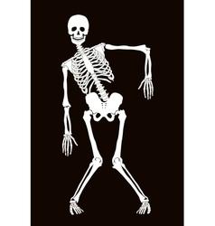 Skeleton vector image vector image