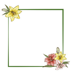 colorfull lily flowers in frame isolated on white vector image