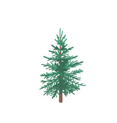 fir tree with snow texture pine xmas vector image