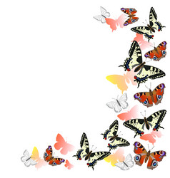 Frame peacock butterflies and swallowtail vector
