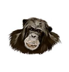 Monkey chimpanzee head portrait from a splash vector