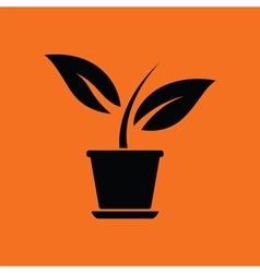 Plant in flower pot icon vector