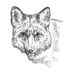 portrait of fox vector image
