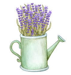 Watercolo lavender tin watering can provence vector