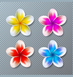 with colorful plumeria flower vector image