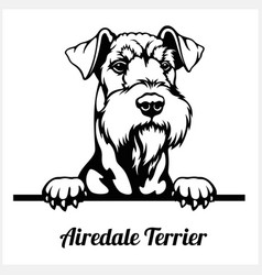 airedale terrier - peeking dogs - breed face head vector image